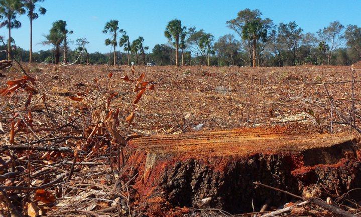 'Intensivering kan impact landbouw op klimaat beperken'