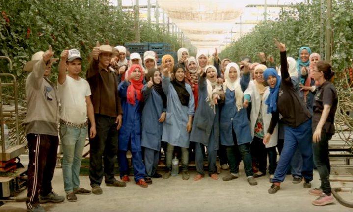 Waarom moeten wij eerlijke tomaten uit Tunesië willen?