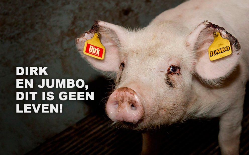 Varkens in Nood vergist zich: Jumbo en Dirk hebben wél welzijnsvarken