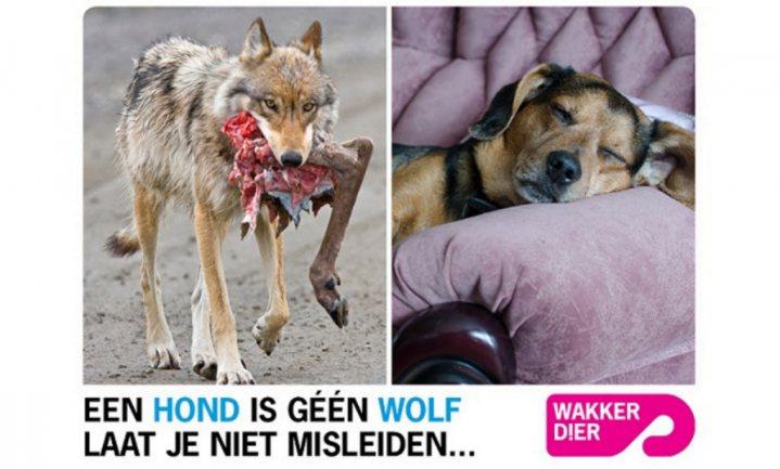 Wakker Dier wil diervriendelijk hondenvoer