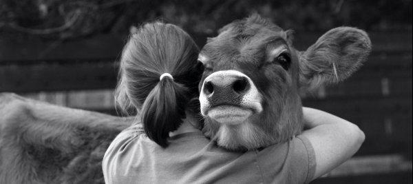 De top-tien van dierwelzijnsverhalen