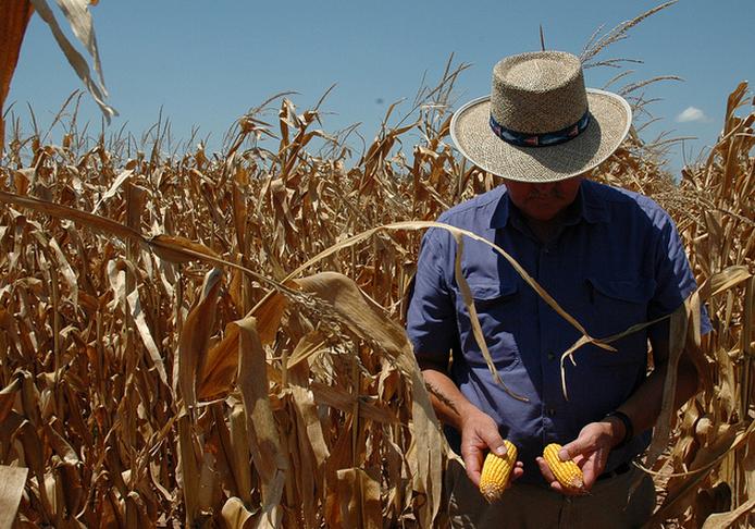 Prijsstijgingen als gevolg van tegenvallende oogsten