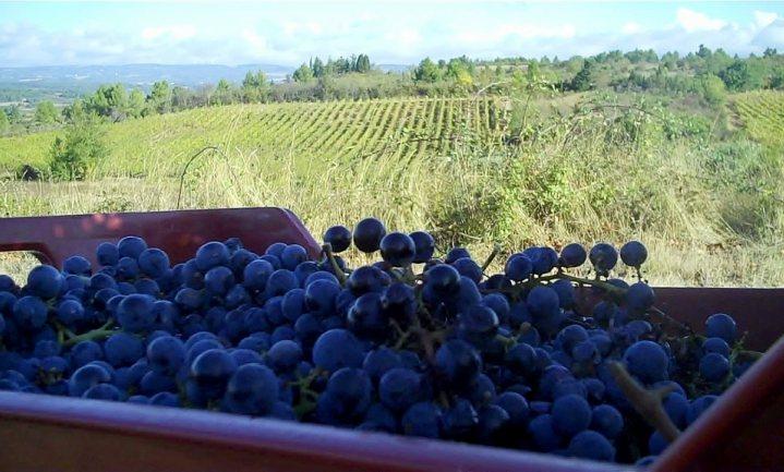 Zuid-Franse wijnmakers bang dat jij andere wijn gaat drinken