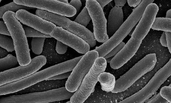 E.coli-uitbraak noopt Britten tot sla en handen wassen