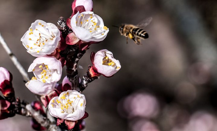 De Nederlandse Bank: 'biodiversiteitsverlies kan Nederland miljardenstrop opleveren'
