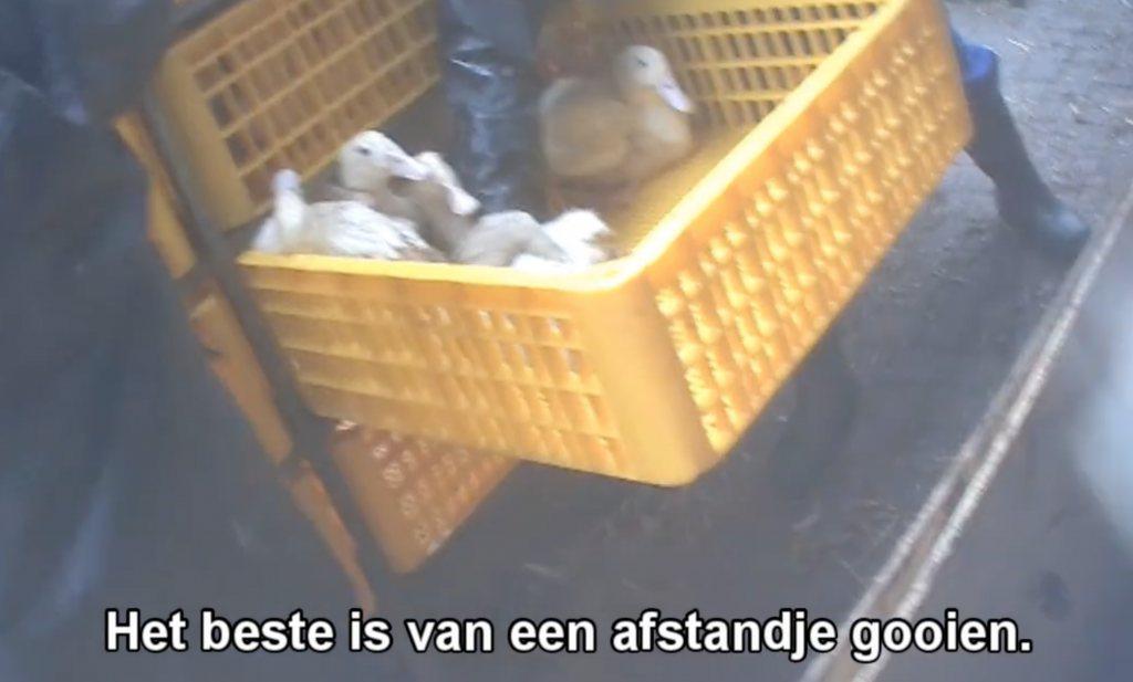 Animal Rights filmt niet alleen voor de consument
