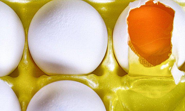 Het Nederlandse ei verkommert