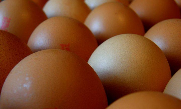 Strafrechtelijk onderzoek naar fipronil in pluimveesector