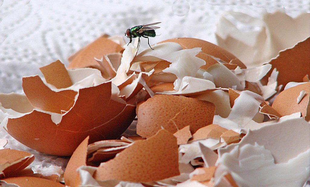 Plastic maken met eierschalen