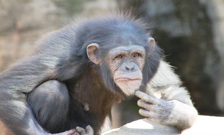 Frans de Waal: 'Waarom zou je jezelf niet als dier zien?'