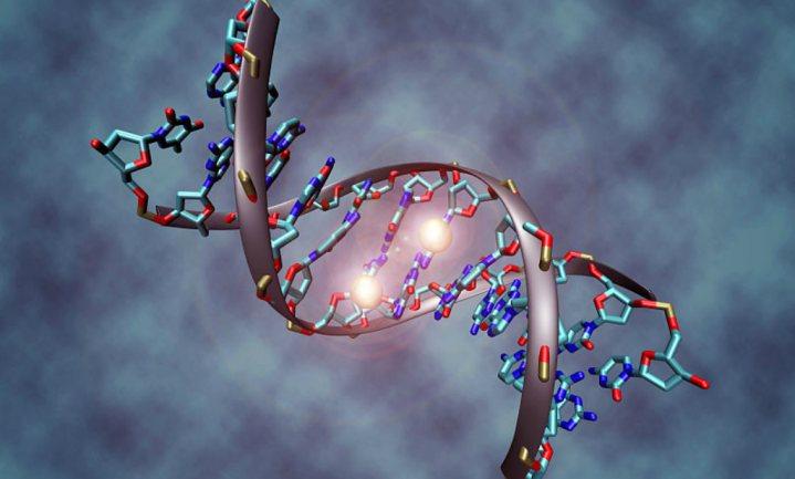 Groningse promovenda duikt diep in de darmgenetica