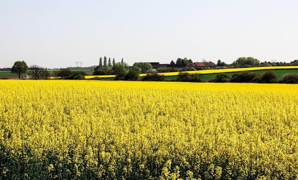 Weg met biobrandstoffen, dan maar meteen superzuinig gaan doen?