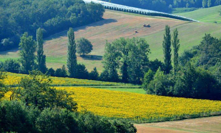 Frankrijk moet EU 1 miljard landbouwsubsidies terugbetalen