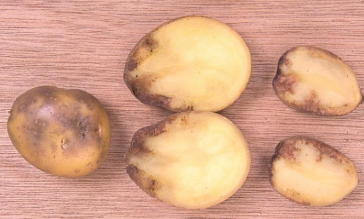 De aardappel en het koningshuis