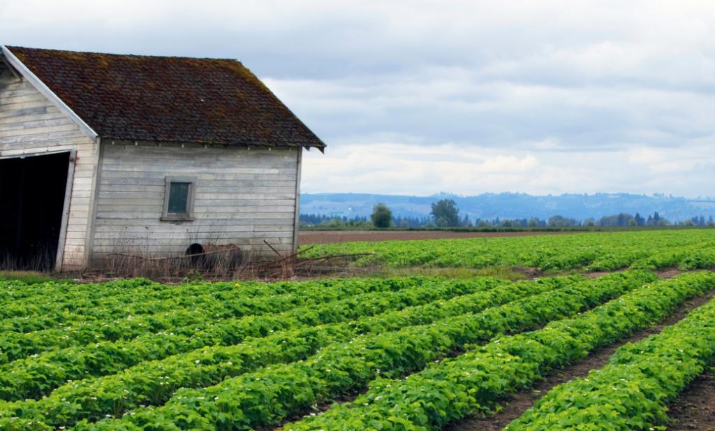 Geen enkel landbouwsysteem gaat de wereld voeden