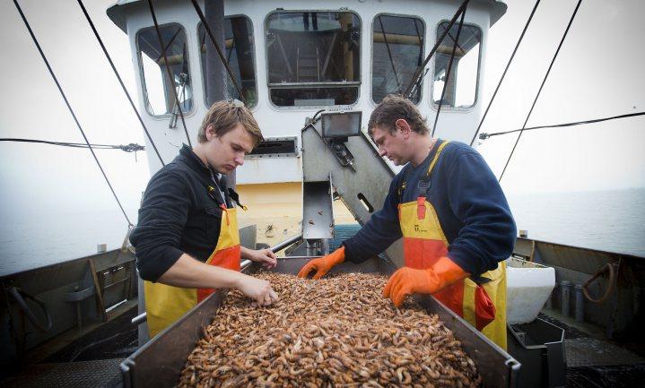 Nederlandse vissers brachten in 2017 25% meer zeevis aan land