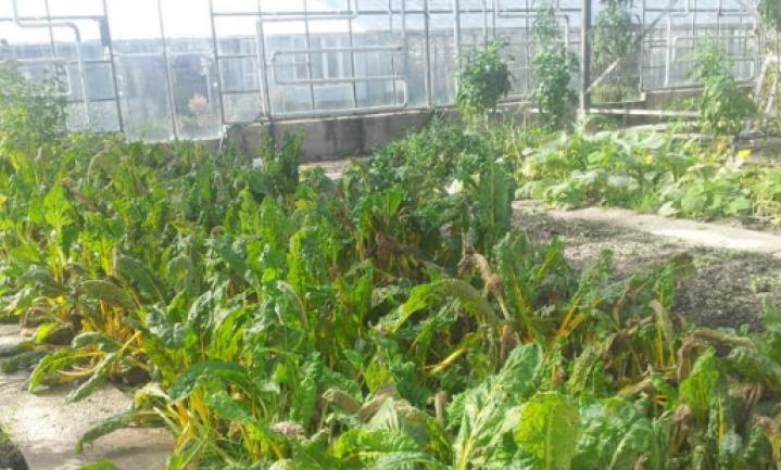 De opmars van de groente op het horecabord