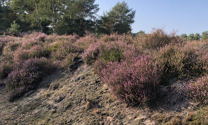 Natuur in Nederland is een vorm van grootschalig tuinieren