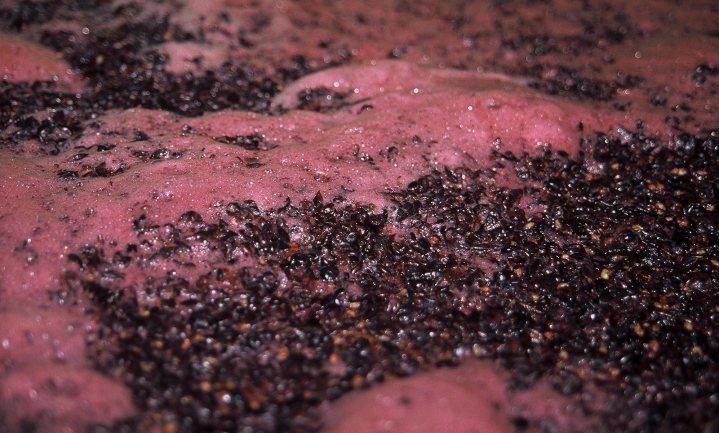 'Gewoon buitengewoon' naslagwerk over de wijnplaneet anno 2015