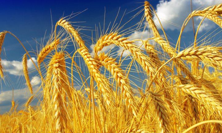 Grote Amerikaanse banken trekken boerenkrediet in