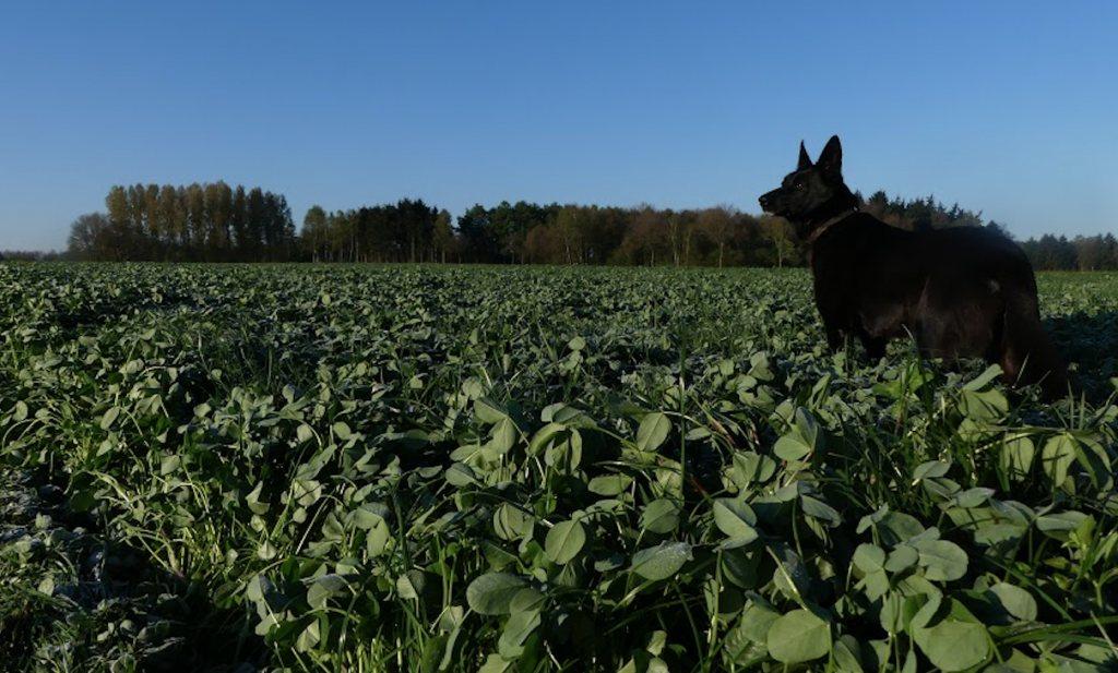 Boeren zonder dierlijke mest (1)