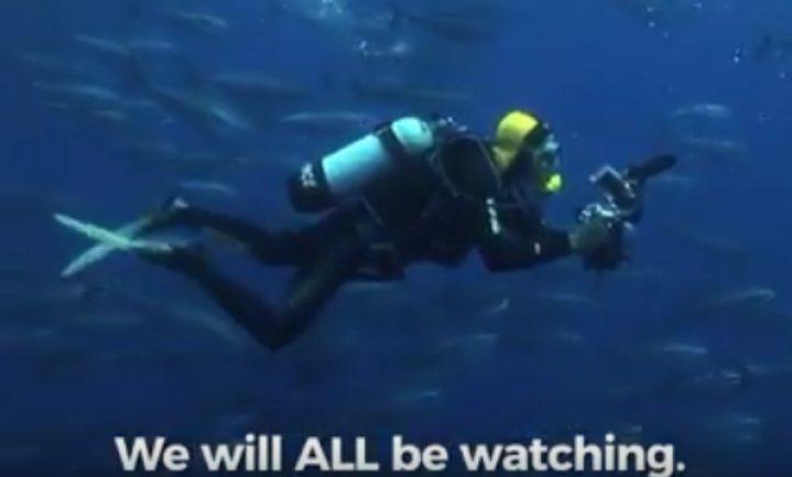 Conservenfabrikant belooft slaafvrije tonijn in blik, vriendelijk gevangen