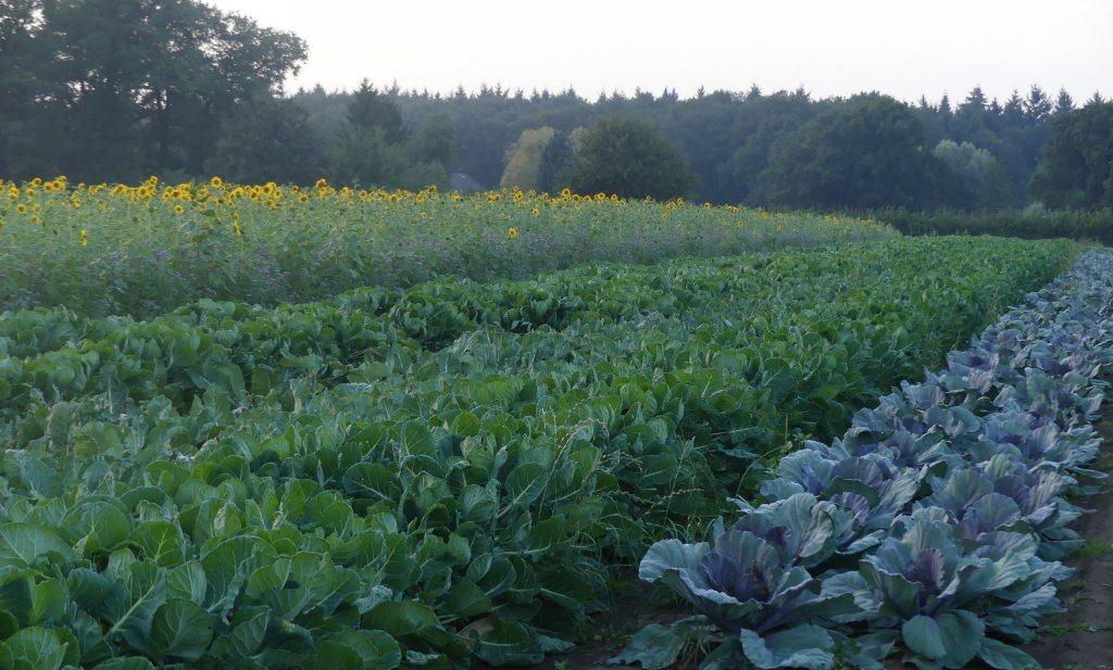Boeren zonder dierlijke mest (2)