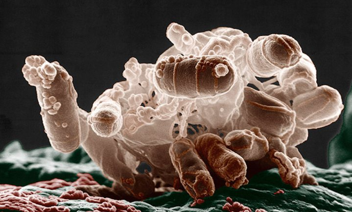 Het microbioom controleert het immuunsysteem (en kan wellicht helpen Covid-19 onschadelijk te maken)