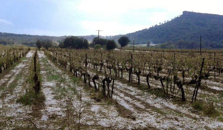 Prefect moet verhagelde wijnboeren Hérault bijstaan