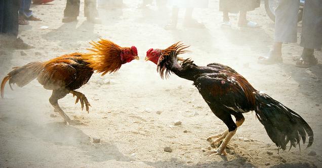 Dierenbescherming verklaart de oorlog aan nieuw sectorlogo