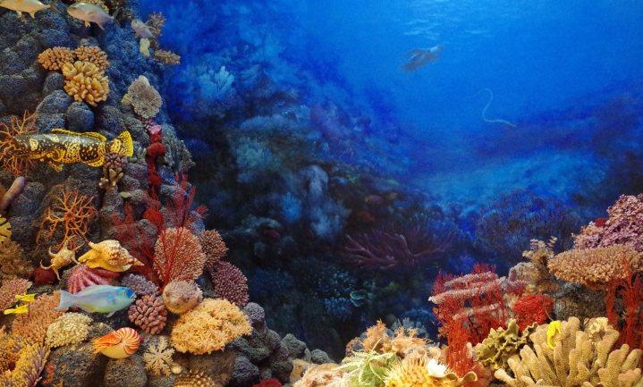 Delft helpt mee aan 'IVF koraal' om het Great Barrier Reef te redden