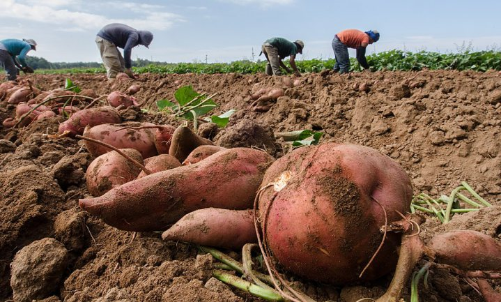 Moeders die zelf voedsel verbouwen, hebben gezondere kinderen