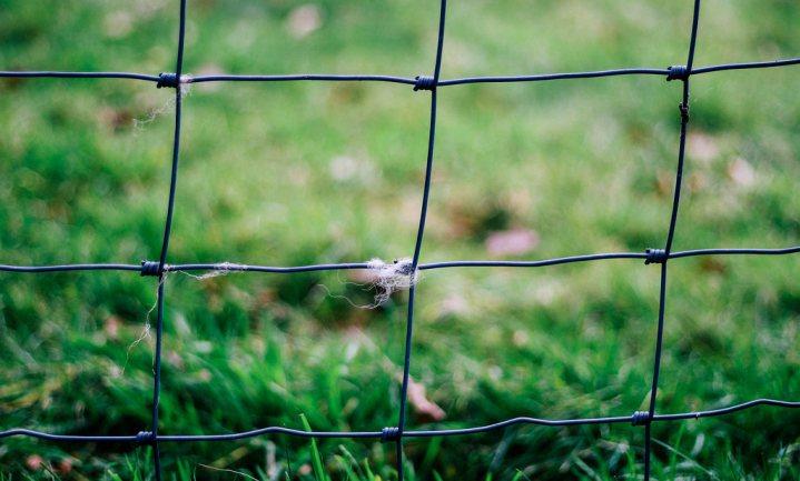 Hek van zeventig kilometer moet Deense varkensproductie beschermen tegen wilde varkens