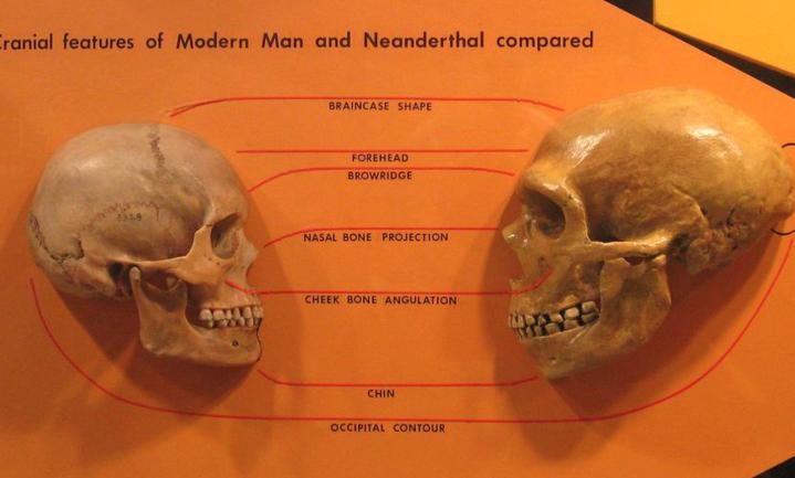Homo sapiens kwam al veel eerder naar Europa maar bleef toen niet
