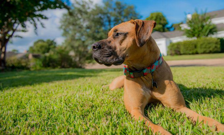 Hond uitlaten voelt veilig en is gezond