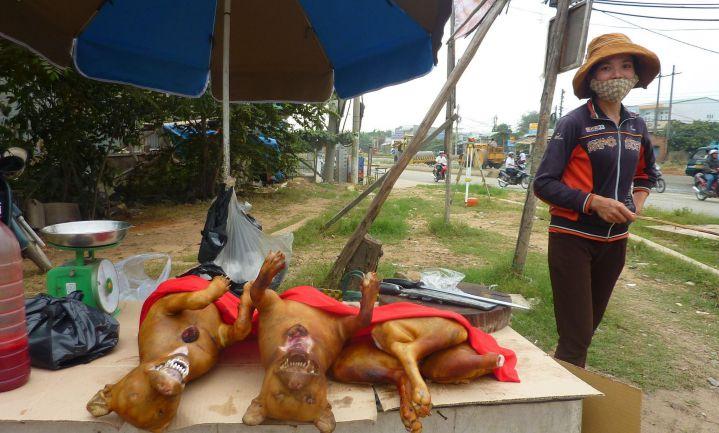 Taiwan verbiedt consumptie honden- en kattenvlees
