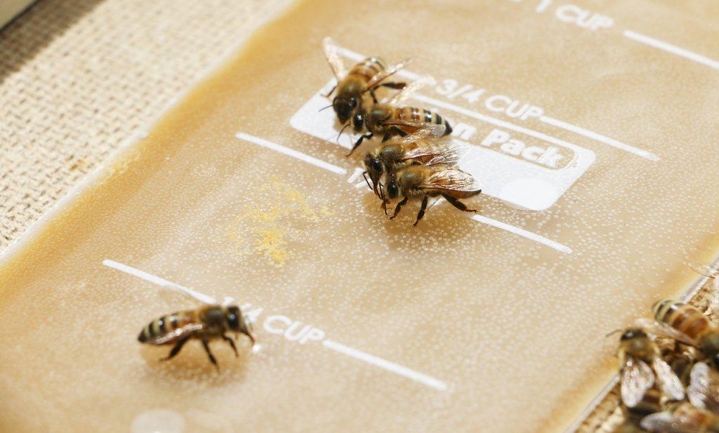 Goedkoop en betrouwbaar: bij een positieve coronatest steken bijen hun tong uit