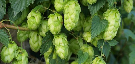 Creatief bier wint terrein