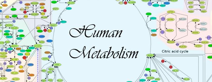 Belangrijke doorbraak: het menselijk metabolisme in kaart gebracht