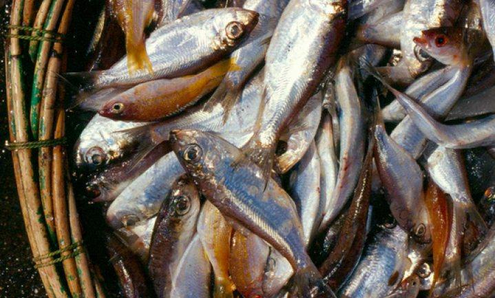 Ducasse schrapt vlees ten gunste van vis en bant suiker uit