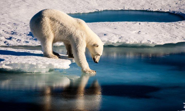 Klimaatverandering en ijsberenblogs revisited: het belang van wetenschappers aan het woord