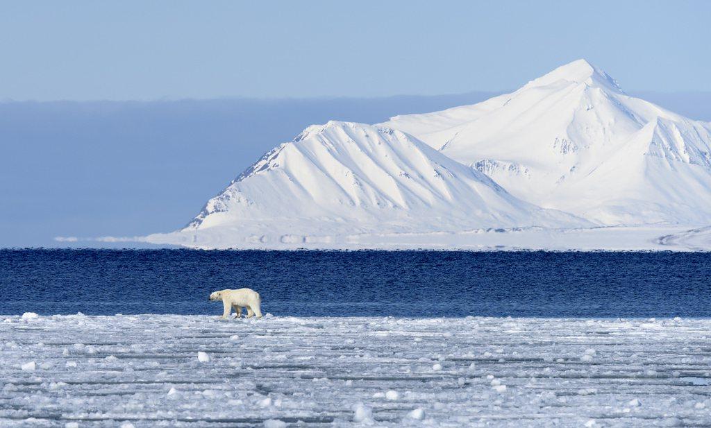 Natuurfilmer laat zien hoe ijsbeer inslaapt door veranderend klimaat