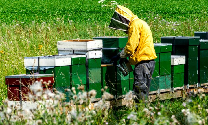 Uniek exportproduct Tasmanië: gezonde, levende bijen