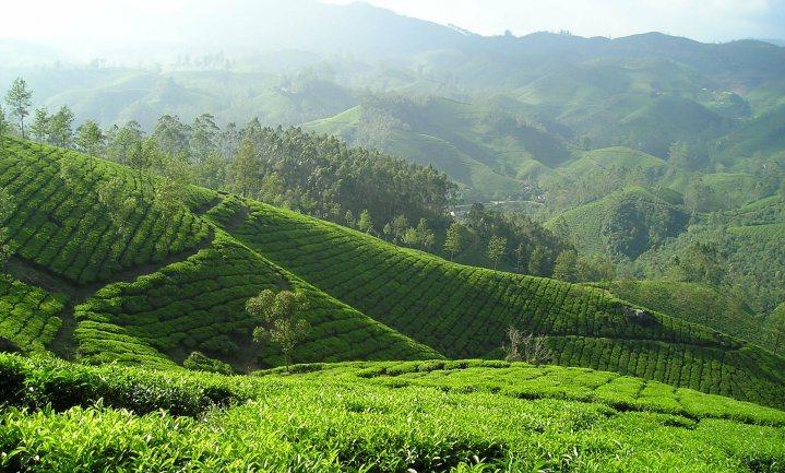 Nederlands theebedrijf biedt €1 voor theedivisie Unilever