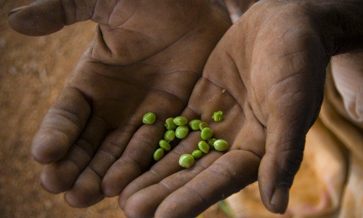 In India plegen dagelijks 41 boeren zelfmoord