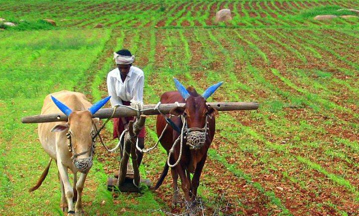 'Klimaatverandering leidt tot 60.000 zelfmoorden onder Indiase boeren'