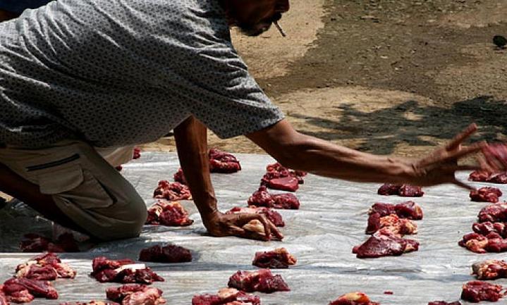 Indonesië krijgt eigen rundvlees niet op de rit