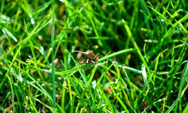 Insectensterfte strekt zich uit tot ver buiten landbouwgronden