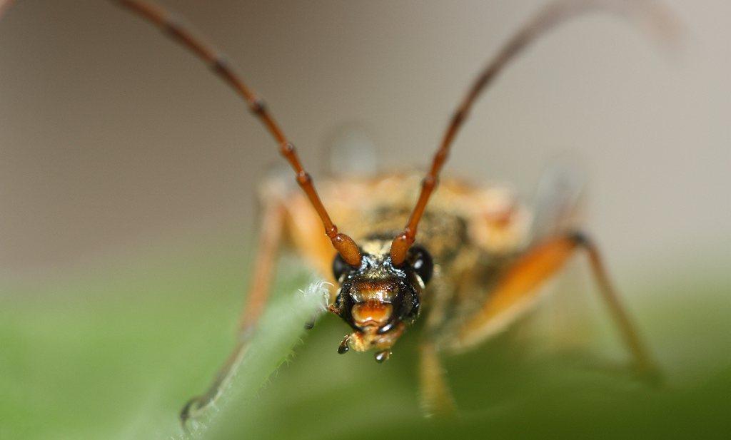 Insectenoverleg achter gesloten deuren wegens 'ingewikkeldheid'