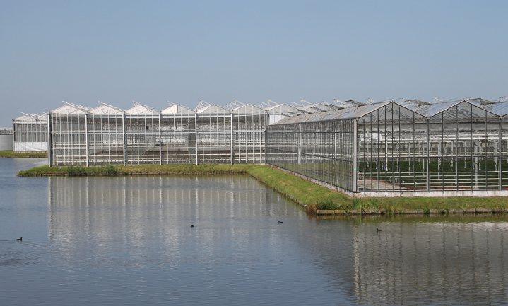Tuinbouw zeurt niet over internationale handel, zuivel en vlees wel